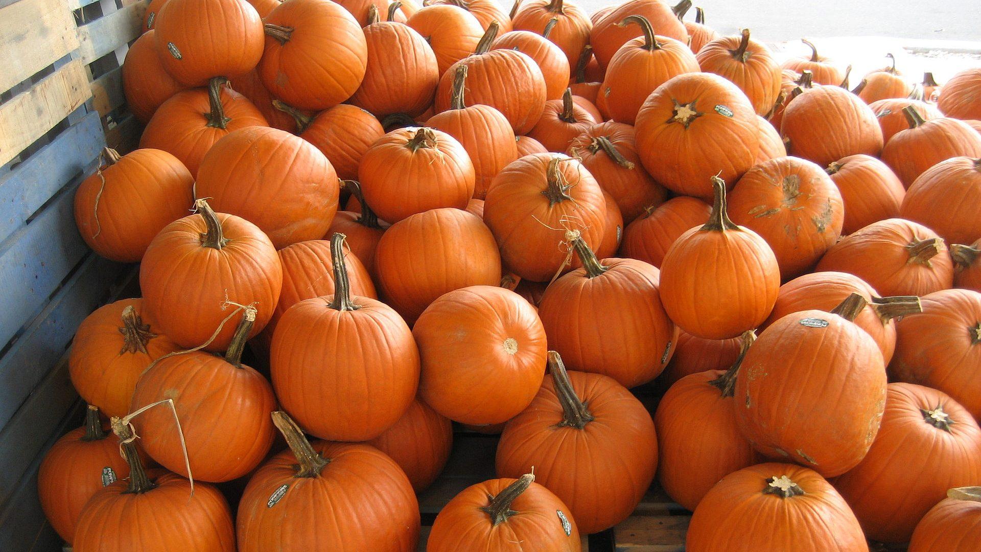 Decorative Picture of Pumpkins