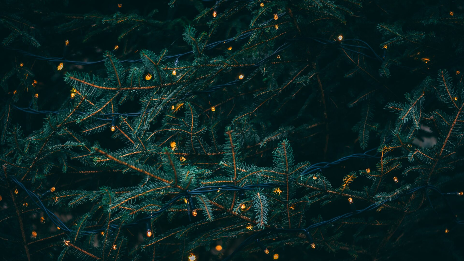 Evergreen tree with lights